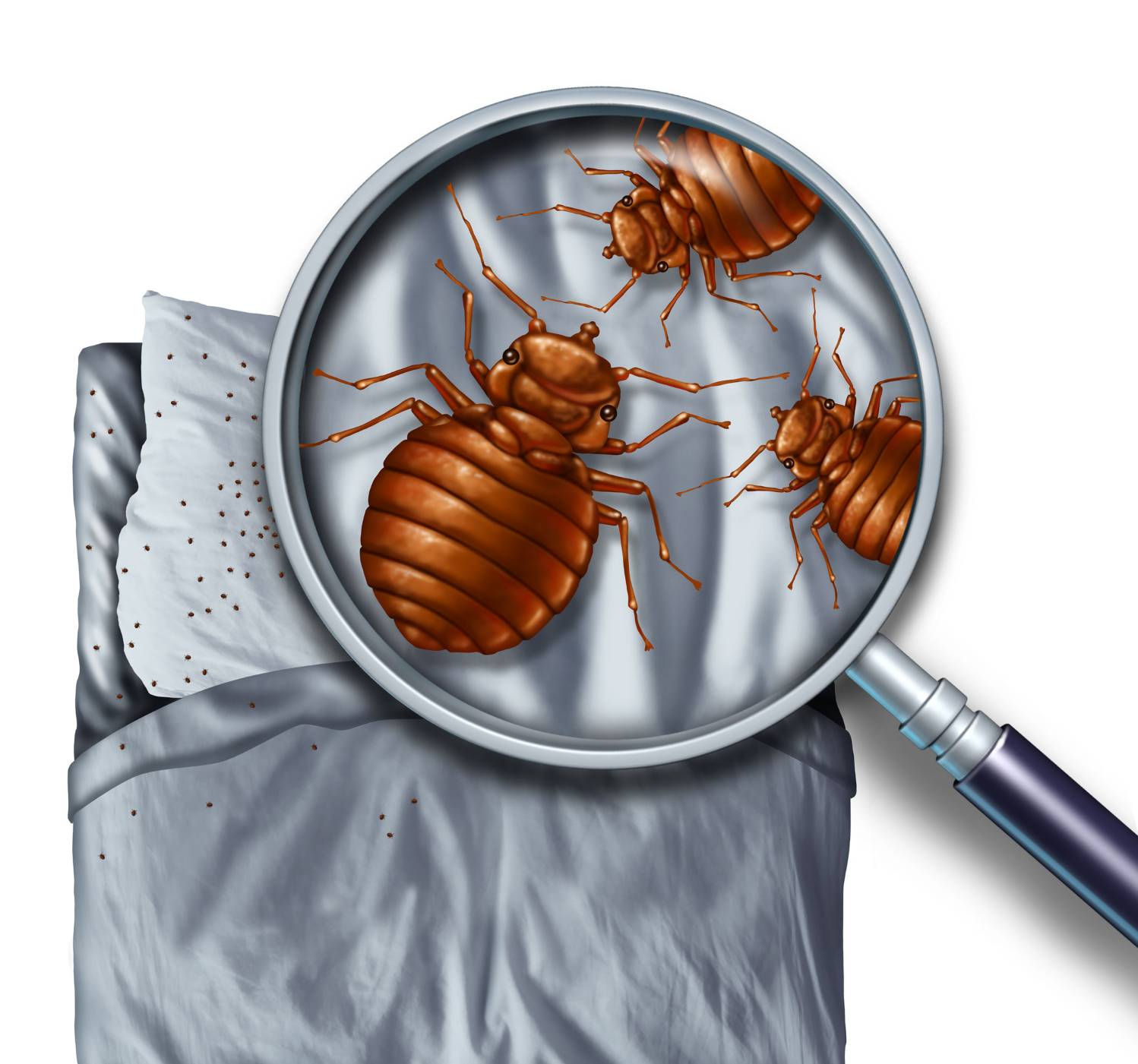 What do bed bugs look like k9 bug detectors - Bed Bug And Mold Detection Dogs